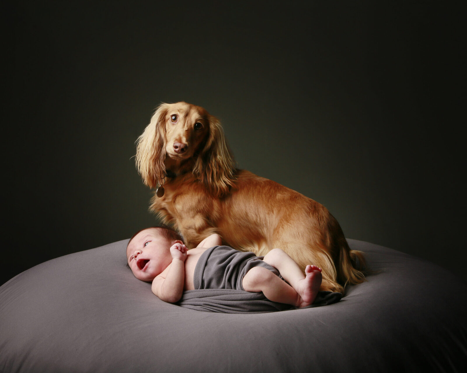 Pet Photography, Baby Photographer Perth, New Born Photographer Perth